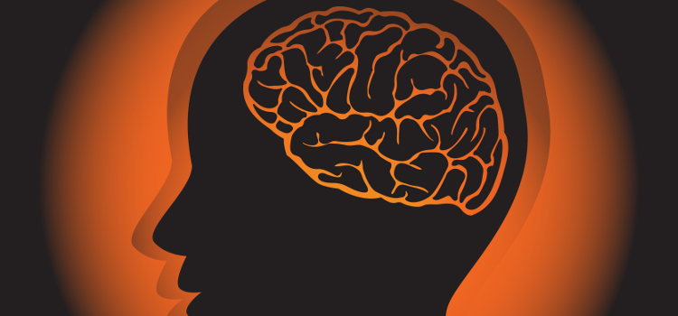 mózg i człowiek