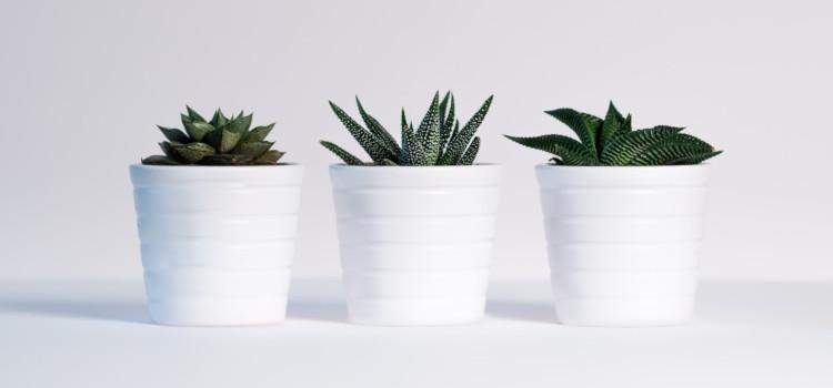 woda przeznaczona dla roślin - na pewno nie twarda woda